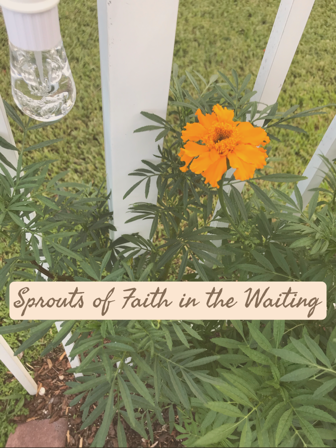 Sprouts of Faith In The Waiting
